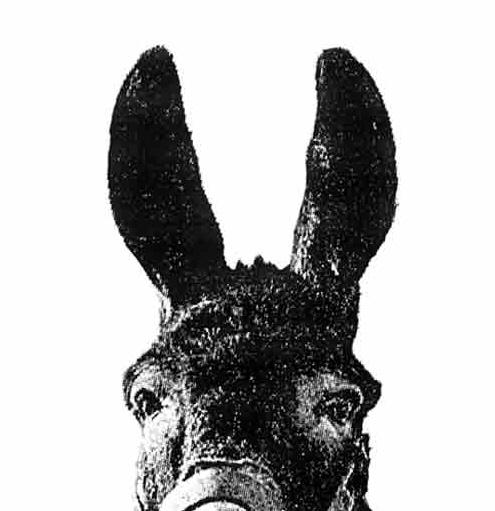 L altra storia dell asino vocialvento for Il verso dell asino